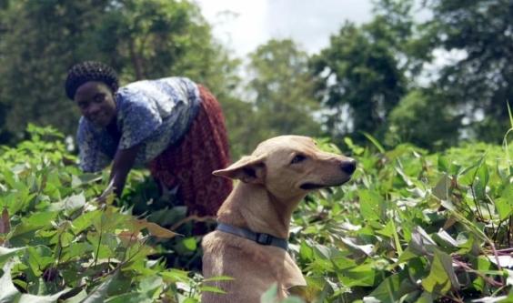 'We Don't Deserve Dogs' a doggone good doc