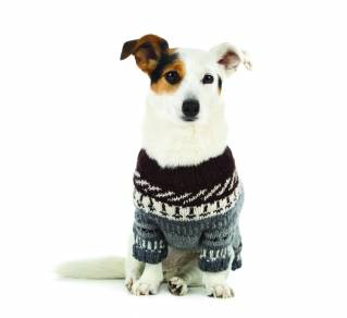 Cold weather and holiday tips for pets