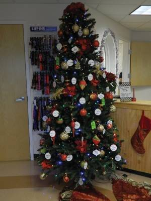 The Hampden Veterinary Clinic's Paws of Hope tree is deoco- rated with tags that could help less fortunate pet owners care for their animals all year long. (edge photo by Jodi Hersey)