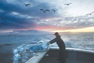 In this July 29, 2014 file photo, Brandon Demmons sends a lobster trap overboard at dawn off of Monhegan Island, Maine. A group of scientists led by Andrew Thomas of the University of Maine says the warming of the Gulf of Maine has added up to 66 days of summer-like temperatures to the body of water.