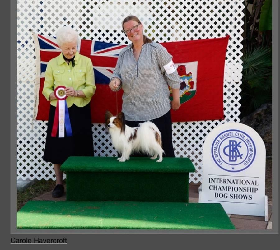 Local Dog Qualifies For Prestigious Shows Adventure