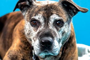 New documentary 'A True Love Story' advocates for homeless senior dogs
