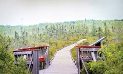 Come explore the Orono Bog Boardwalk