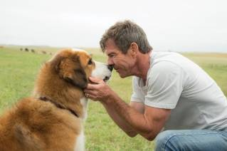 Must love dogs – 'A Dog's Purpose'