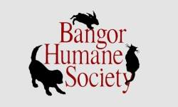 Second annual charity motorcycle ride to benefit furry friends at BHS