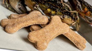 Dog biscuits made with invasive green crabs pass the taste — and sniff — test