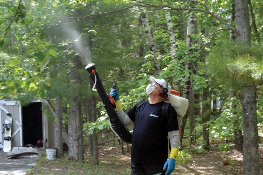how to kill mosquitoes in yard