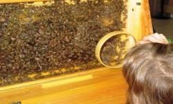 Bug Maine-ia Infests Maine State Museum
