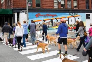 Dogs have their day with 'Paws on Parade'