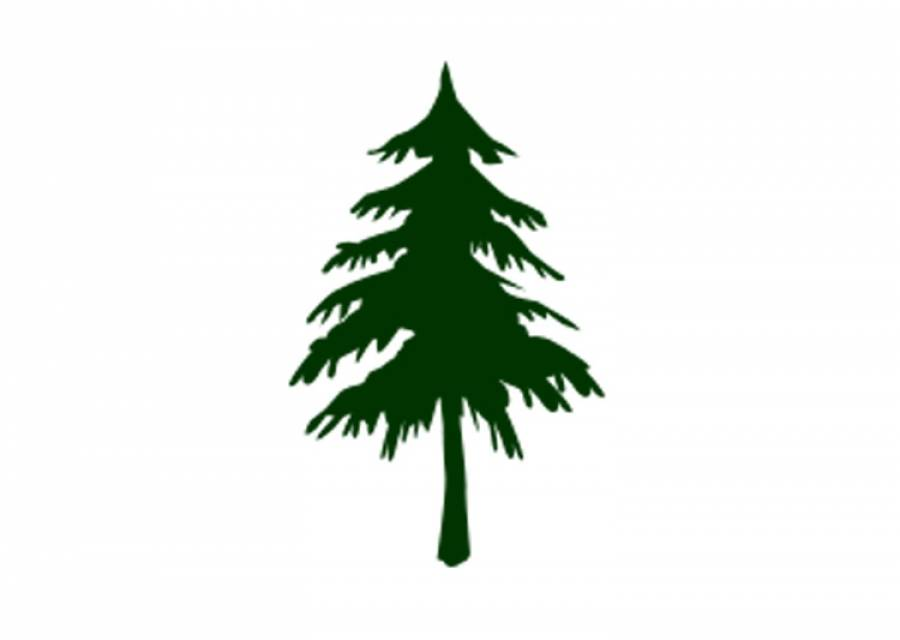 Maine Forest Service Christmas tree