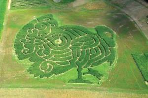 Treworgy's corn maze honors Thanksgiving butterball