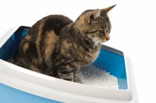 Cat litter: who gets to choose?
