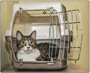 Make your life easier - get your cats to love their carrier