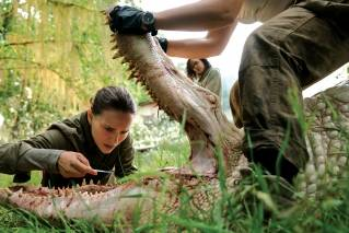 Too weird to live and too rare to die – 'Annihilation'