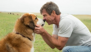 'A Dog's Journey' formulaic, but still worth taking