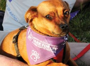 2nd annual Greater Bangor Bark For Life raises thousands for cancer research