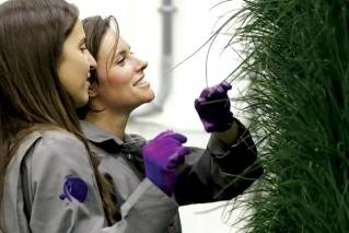 In this Jan. 18, 2018 photo, senior grower Molly Kreykes, left, and associate grower Jess Kowalski inspect chives growing on towers in the grow room at the Plenty, Inc. office in South San Francisco, Calif. More than 30 high-tech companies from the U.S. to Singapore hoping to turn indoor farming into a major future food source, if only they can clear a stubborn hurdle: high costs.